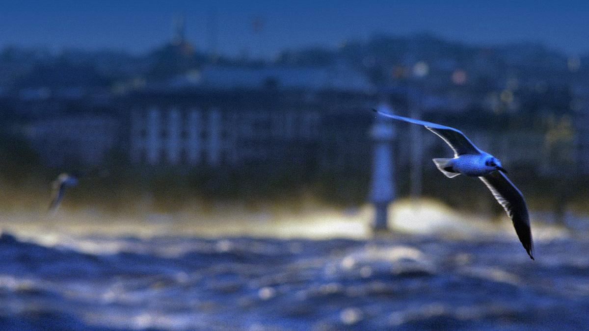blue-lakes-advisors-photo-mouette-16-9